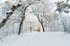 Snowy footpath. Footway surrounded by trees all covered with snow in the late afternoon royalty free stock photography