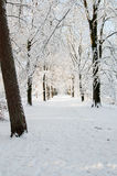 Snowy footpath. Footway surrounded by trees all covered with snow in the late afternoon royalty free stock photo