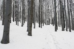 Snowy Footpath Through a Forest. Stock Images