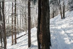 Snowy Footpath Through A Sunny Forest. Royalty Free Stock Photo