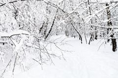 Snowy footpath in urban park in winter. Snowy footpath in urban Timiryazevskiy park in Moscow city in winter royalty free stock images