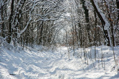 Snowy footpath in winter forest. Natural background royalty free stock photo