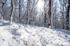 Snowy footpath in winter forest and sun rays. Snowy footpath in winter forest. Sunny scene. Sun rays stock images