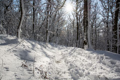 Snowy footpath in winter white forest. Sunny scene royalty free stock image