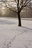 Snowy Footprints. Footprints pass by a tree in the snow stock images