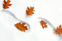 Snowy footsteps Stock Images