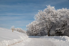In a snowy forest Royalty Free Stock Photo