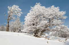 In a snowy forest Royalty Free Stock Images
