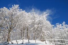 Snowy forest. Trees and lawns covered with icy snow Royalty Free Stock Photography