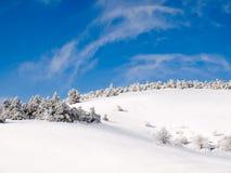 Snowy forest. Stock Photos