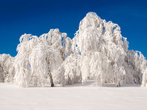 Snowy forest. Royalty Free Stock Photography