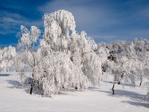 Snowy forest. Royalty Free Stock Photos