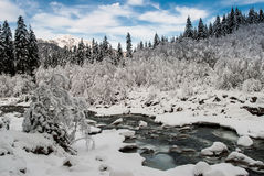 Free Snowy Forest Stock Photography - 27761702