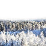 Snowy forest. On sunny day royalty free stock images