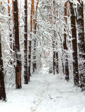 Snowy forest. A snowy road in forest Royalty Free Stock Photos