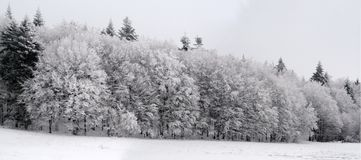 Snowy forest. Panoramic view of snowy forest Stock Photos