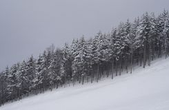 Snowy forest. Photograph of mountain slope with snowy trees Royalty Free Stock Images