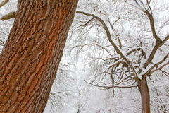 Snowy forest Stock Image