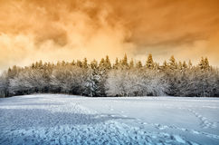 Snowy forest Royalty Free Stock Images