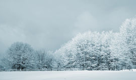 Snowy forest Royalty Free Stock Photography