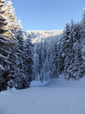 Snowy Forest in Austrian Alps Royalty Free Stock Photography