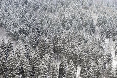 Snowy Forest Background Royalty Free Stock Image