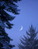 Snowy forest on Christmas night Stock Image