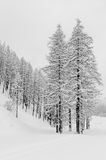 Snowy forest cloudy day black and white Stock Images