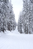 Snowy forest Royalty Free Stock Image