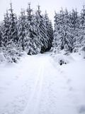 Snowy forest and cross-country ski trail Stock Image