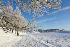 Snowy forest with deciduous trees Royalty Free Stock Photo