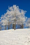 Snowy forest with deciduous trees Royalty Free Stock Photos