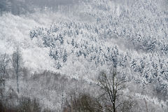 Snowy forest detail Royalty Free Stock Photography