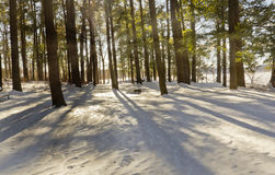 Snowy Forest at Dusk Stock Images