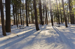 Snowy Forest at Dusk Royalty Free Stock Photography