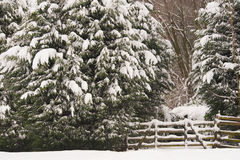 Snowy forest entrance Stock Images
