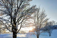 Snowy forest in the evening time Royalty Free Stock Images