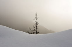 Snowy forest in fog Stock Image