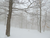 Snowy forest in fog Stock Photos