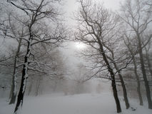 Snowy Forest. In fog with dark tree silhouettes, sun shining through the fog Stock Photography