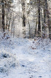 Snowy forest footpath. Footpath in snowy winter forest royalty free stock photos