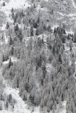 Snowy forest in France Royalty Free Stock Image