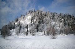 Snowy forest on the hill. Snowy mixed forest on the hill Royalty Free Stock Photo