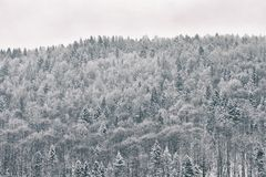 Snowy forest on the hill. Winter landscape.  royalty free stock photography