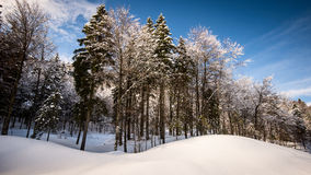 Snowy forest landscape. Snowy forest mountain landscape in winter Royalty Free Stock Photo