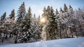 Snowy forest landscape. Snowy forest mountain landscape in winter Stock Image