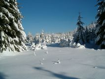 Snowy forest landscape, spruce trees covered with snow, blue sky, suitable for PF photo. Relaxing winter nature. Natural photo Stock Photos