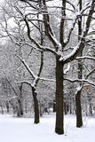 Snowy forest landscape Royalty Free Stock Photography