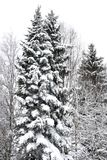 Snowy forest landscape. Snowy winter forest landscape in Finland Stock Photography