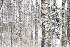 Snowy forest landscape Royalty Free Stock Photos